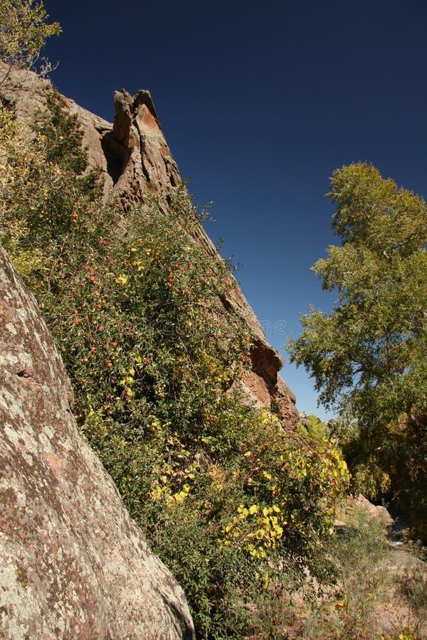 Pommes de montagne rocheuse photographie stock