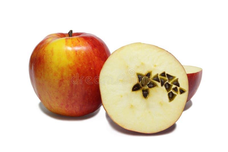 Pommes De Noël Image libre de droits