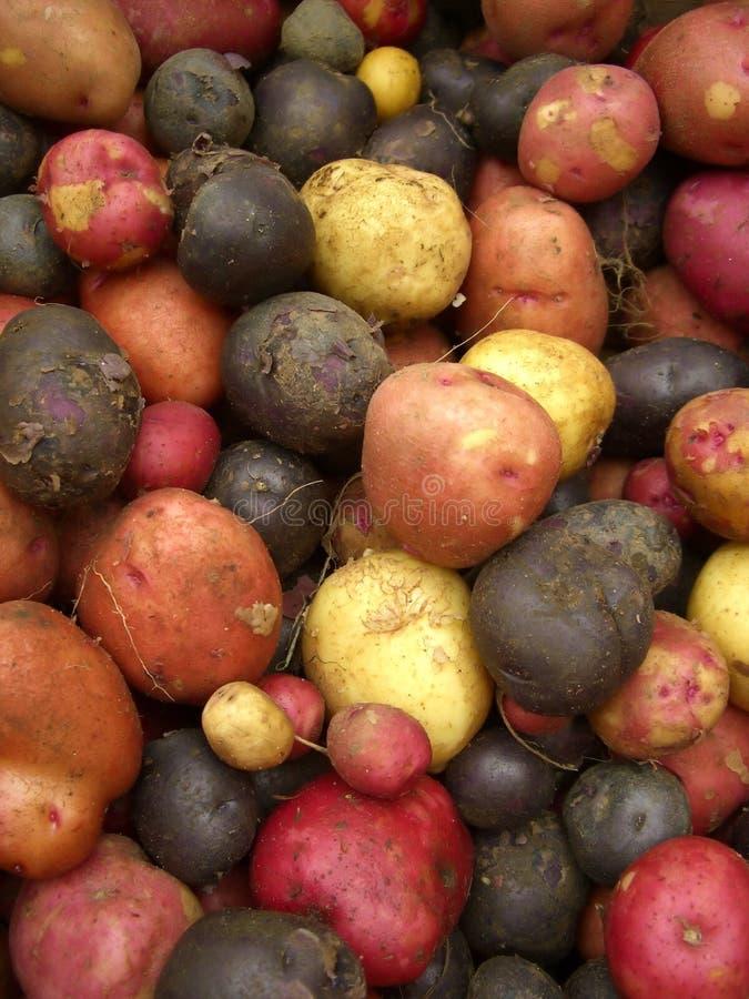 Pommes de terre au marché image libre de droits