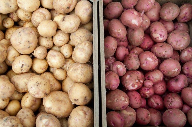 Pommes de terre blanches et rouges au marché de ferme images stock