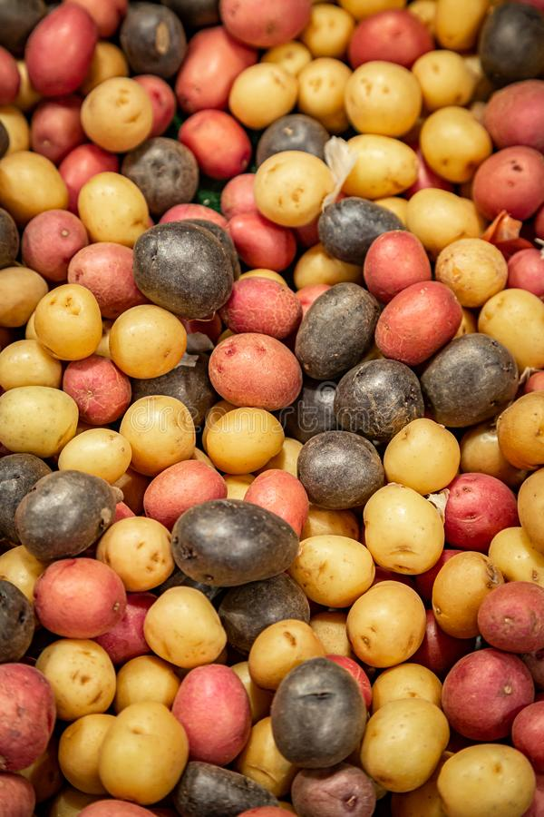 Pommes de terre d'arc-en-ciel photographie stock