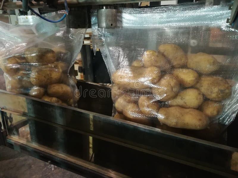 Pommes de terre d'emballage dans une usine photo libre de droits