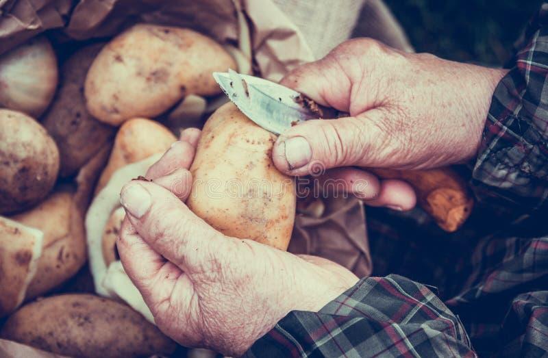 Pommes de terre d'?pluchage Experts épluchant des pommes de terre Vieilles mains images libres de droits