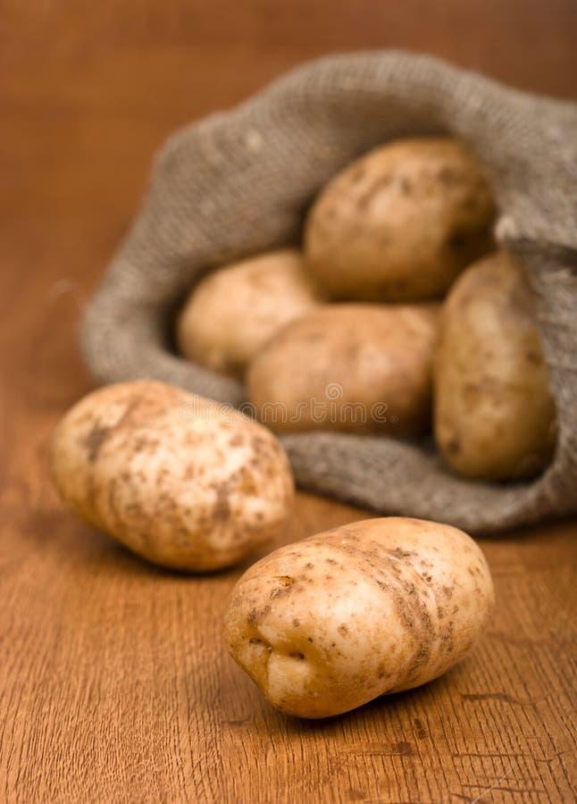 Pommes de terre de moisson photographie stock