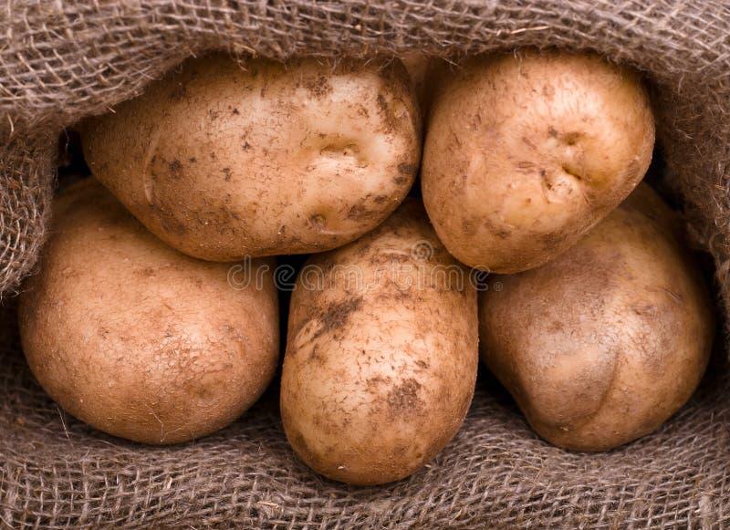 Pommes de terre de moisson dans le sac à toile de jute image stock