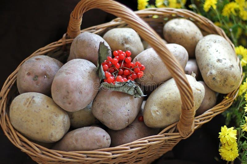 Pommes de terre et viburnum dans un panier Jour d'action de grâces moisson images stock