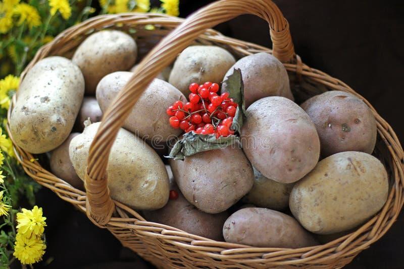 Pommes de terre et viburnum dans un panier Jour d'action de grâces moisson photographie stock libre de droits