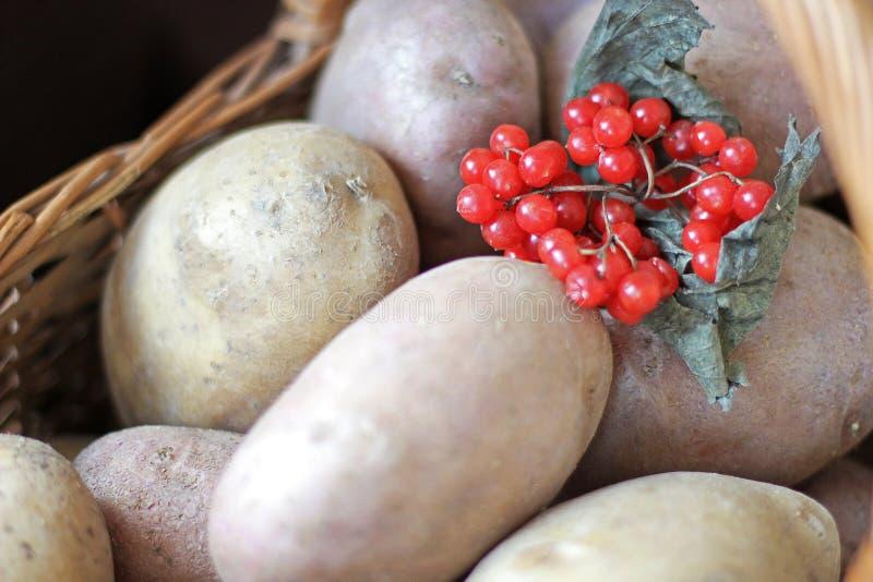 Pommes de terre et viburnum dans un panier Jour d'action de grâces moisson photographie stock