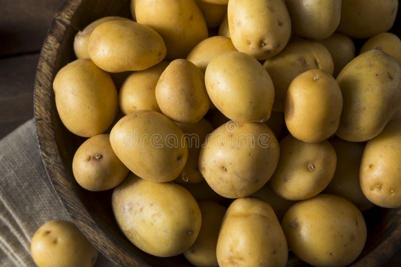 Pommes de terre organiques crues d'or de bébé photo stock