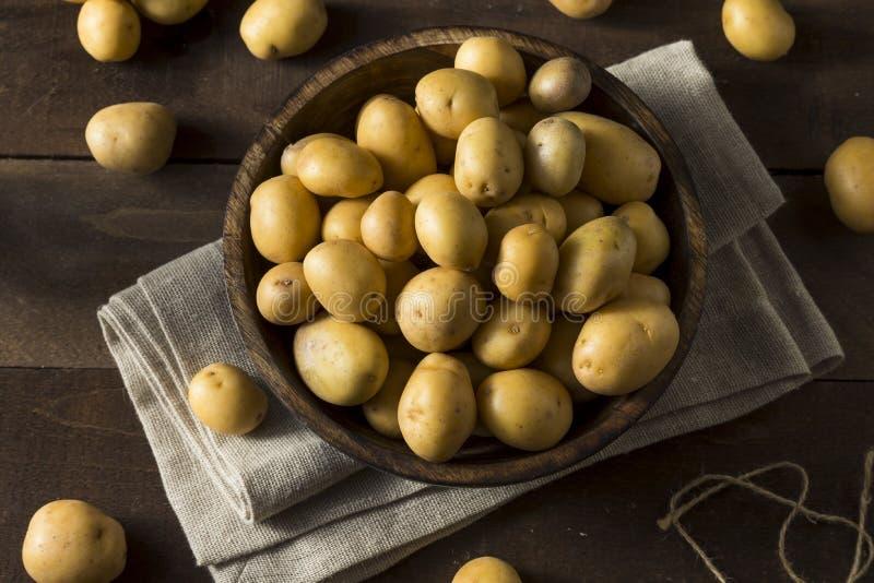 Pommes de terre organiques crues d'or de bébé photos stock