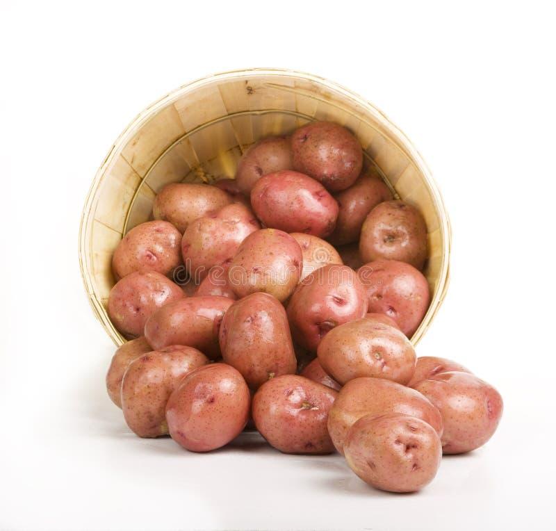 Pommes de terre rouges photographie stock libre de droits
