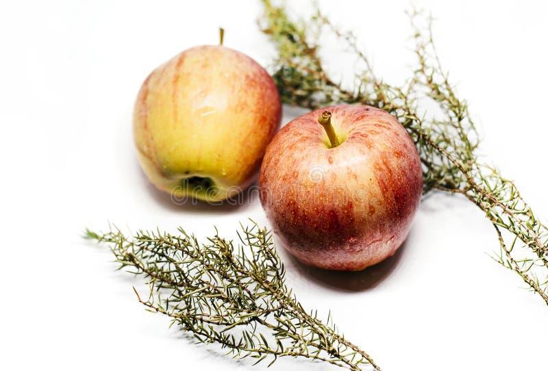 Pommes et genévrier sur le fond blanc images stock