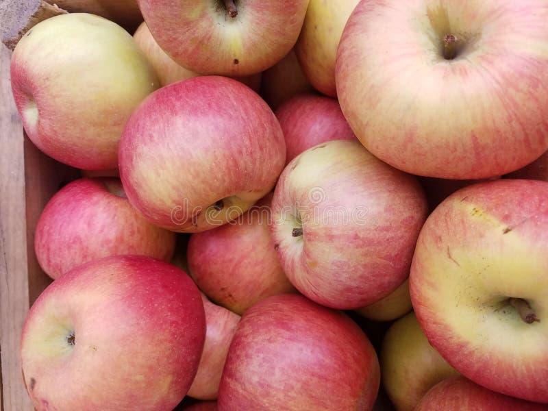 Pommes mûres Delicious à vendre photographie stock libre de droits