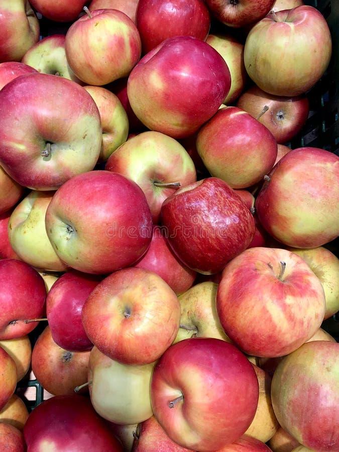 Pommes mûres rouges en grande quantité dans un plateau photo libre de droits
