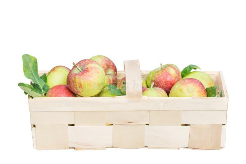 Pommes organiques dans un panier en bois large D'isolement photos stock