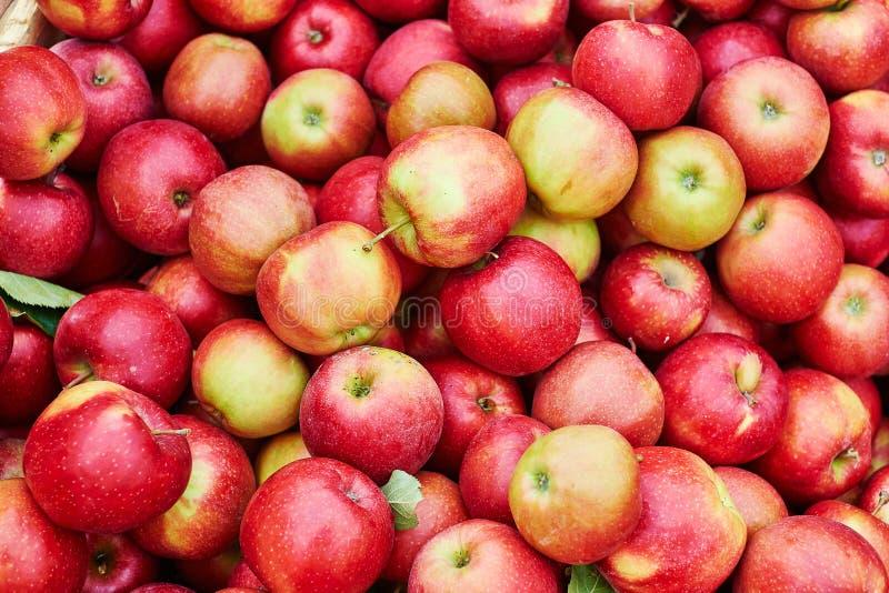 Pommes organiques fraîches photo stock