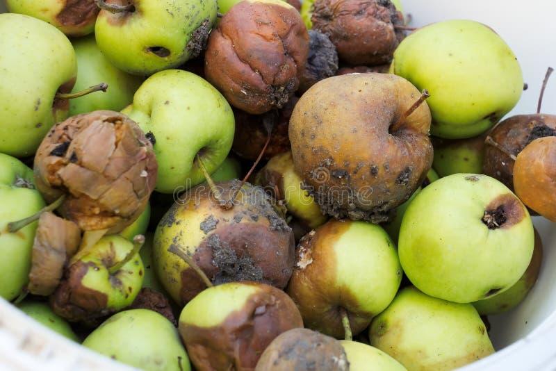 Pommes putréfiées image libre de droits