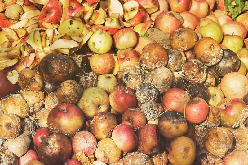 Pommes putr?fi?es dans le jardin photo stock
