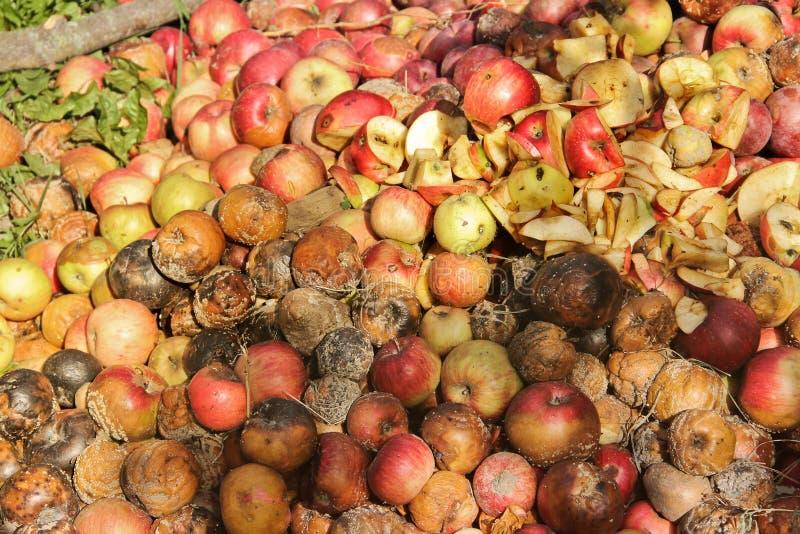 Pommes putr?fi?es dans le jardin image stock