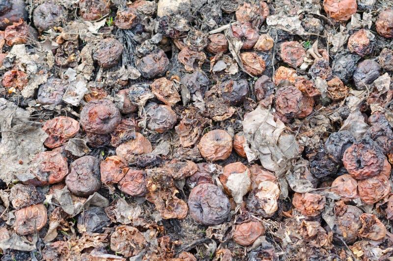 Pommes putr?fi?es Noir et texture de fond de Brown photos stock