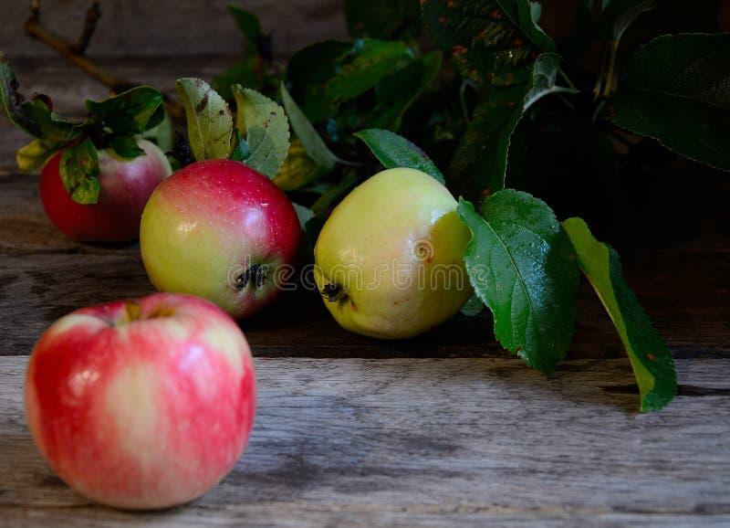 Pommes rassemblées en jardin sur une table rustique photographie stock