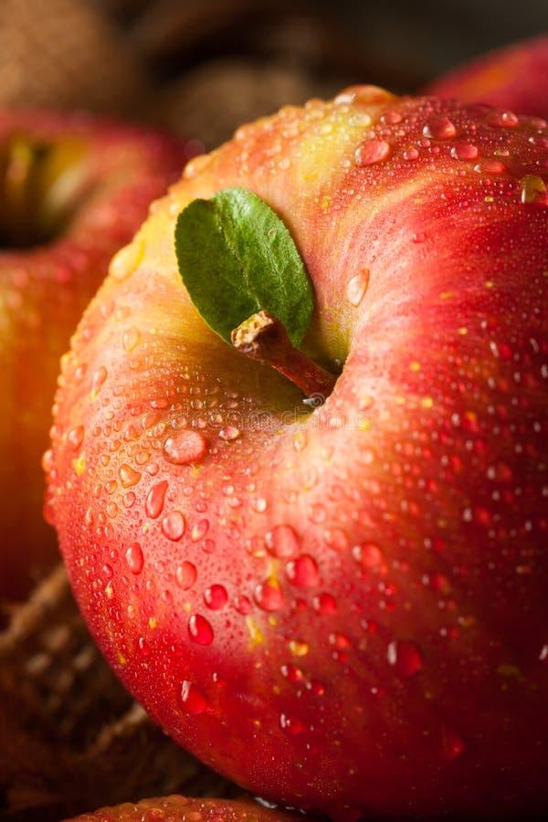 Pommes rouges crues de Fuji photographie stock