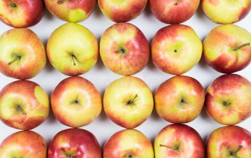 Pommes rouges et jaunes fraîches sur le plein cadre de fond blanc photos libres de droits