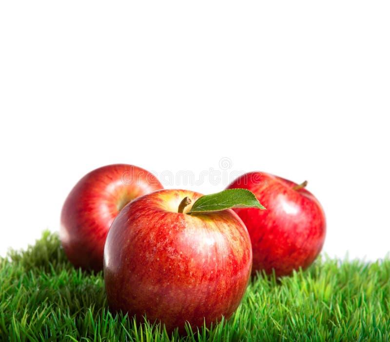 Pommes royales de gala photographie stock