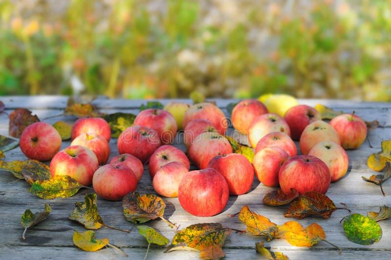 Pommes sur la table en bois images stock
