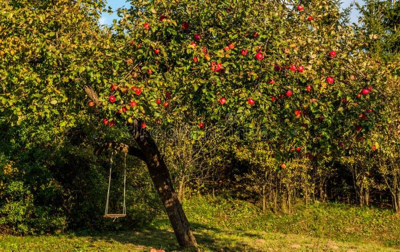 Pommier avec les pommes rouges photo stock image du pomme arbre 91835944 - L arbre le pommier ...