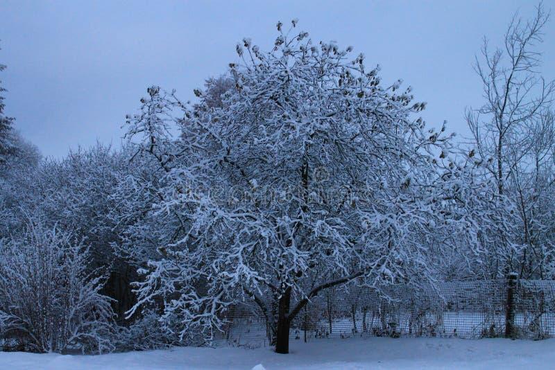 Pommier de jardin d'hiver dans la neige images libres de droits