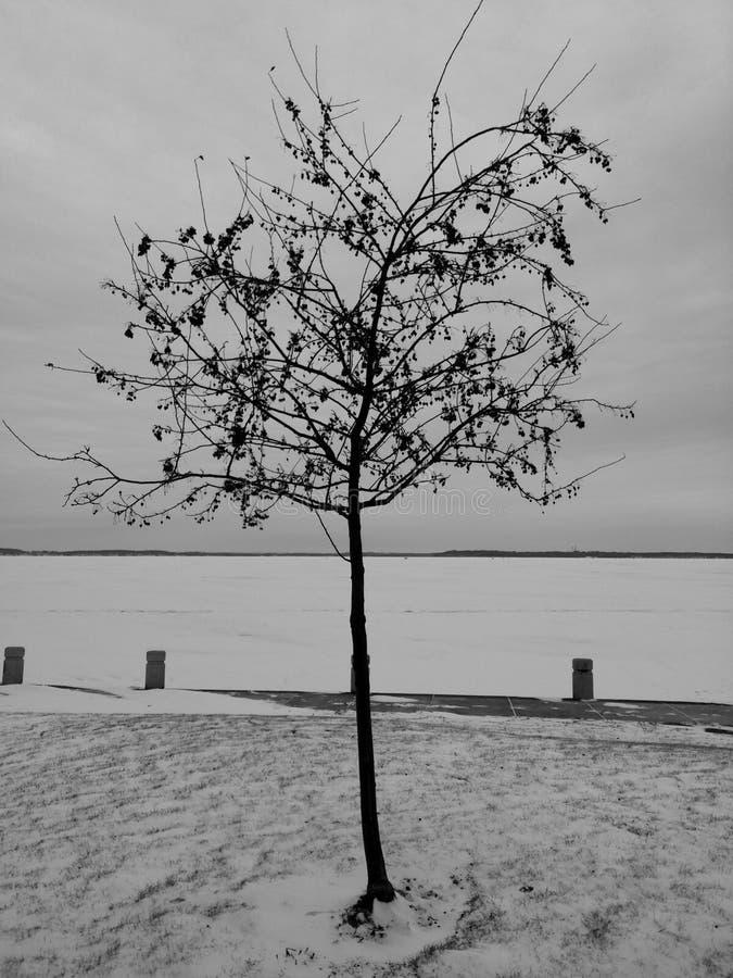 Pommier sauvage avec de petits fruits et fond d'hiver de neige avec un lac congelé images libres de droits