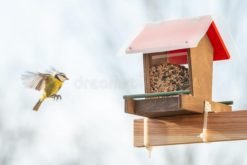 Pomoc dla małych miasto ptaków przeżyjący podczas zima sezonu z a fotografia royalty free