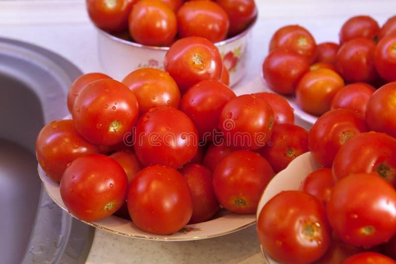 Pomodori Bagnati Freschi Immagini Stock Libere da Diritti