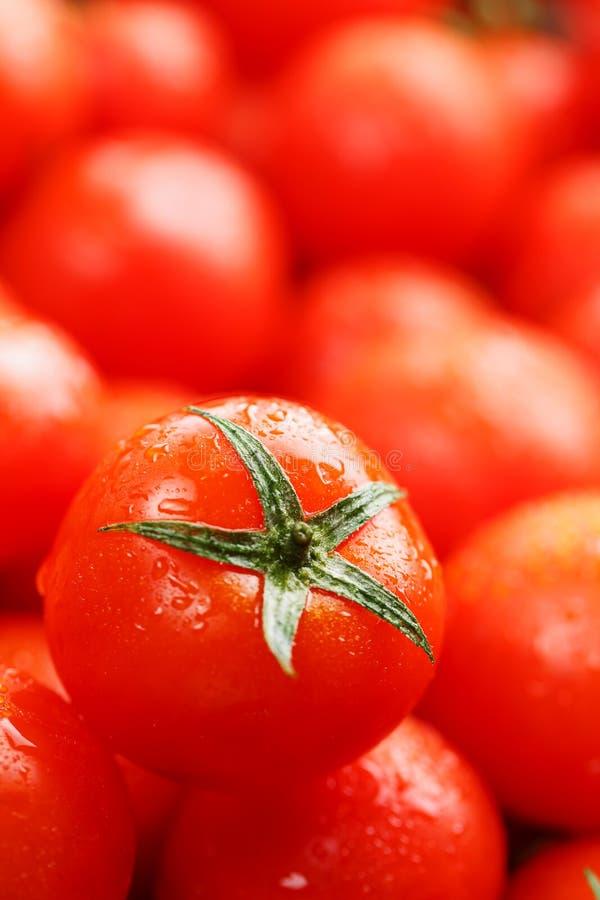 Pomodori ciliegia freschi con il primo piano Pomodori di rosso del fondo Un gruppo di frutti maturi succosi Fondo rosso dei pomod immagini stock