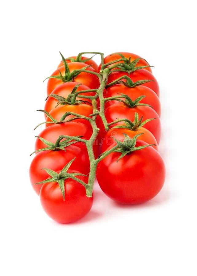 Pomodori ciliegia sul ramo immagini stock libere da diritti