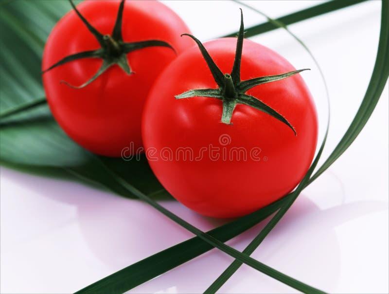 Pomodori con i fogli fotografia stock libera da diritti