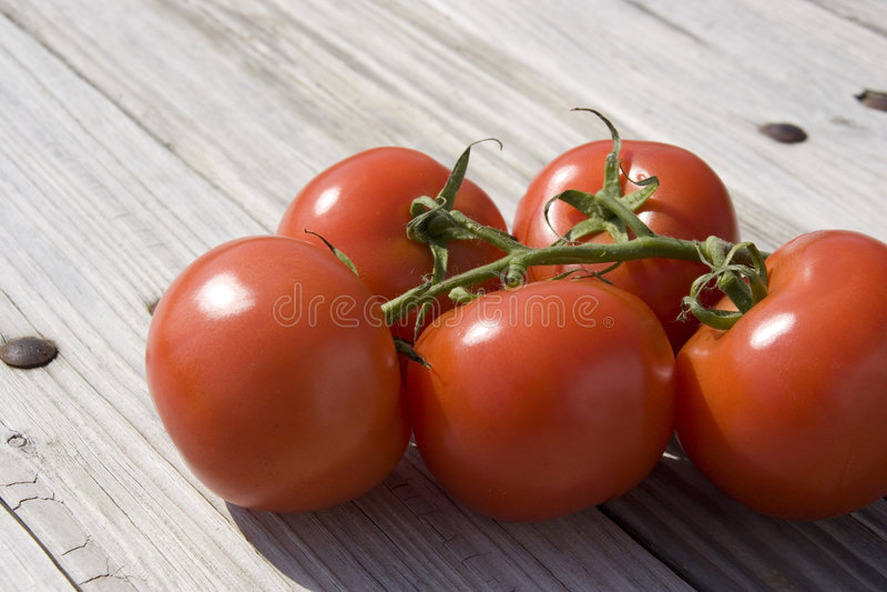 Download Pomodori del giardino fotografia stock. Immagine di giardinaggio - 7305460