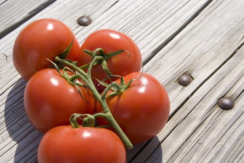 Download Pomodori del giardino immagine stock. Immagine di sugoso - 7305487