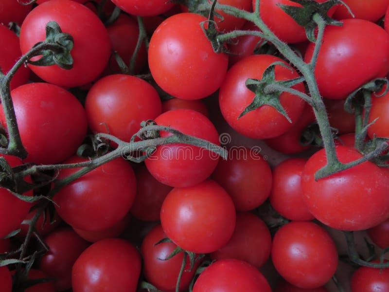 Pomodori deliziosi con buoni sguardi e colore incredibile fotografia stock libera da diritti