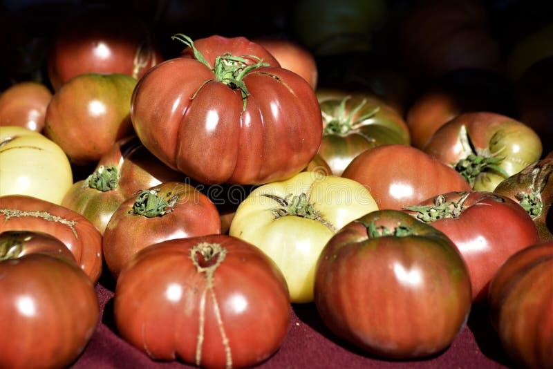Pomodori di cimelio immagine stock libera da diritti