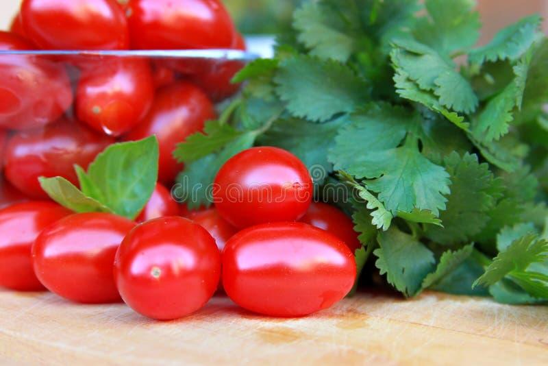Pomodori e cilantro freschi fotografie stock libere da diritti
