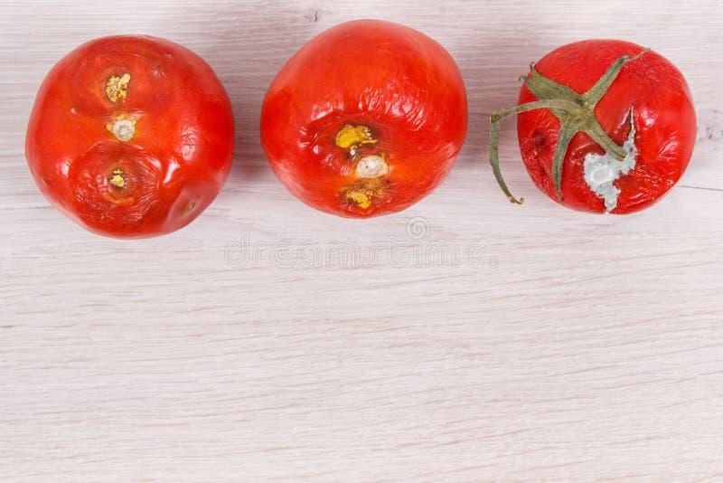 Pomodori guastati con le verdure non sane e disgustose della muffa, posto per testo fotografia stock
