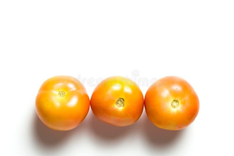 Pomodori isolati sopra fondo bianco fotografia stock