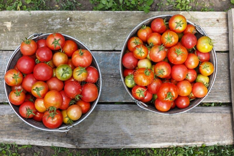 Pomodori, raccolto, prodotti naturali, prodotti del mestiere, agricoltura fotografia stock