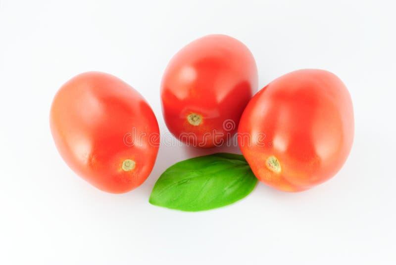 Pomodori (Roma - solanum lycopersicum) con una singola foglia verde fotografie stock