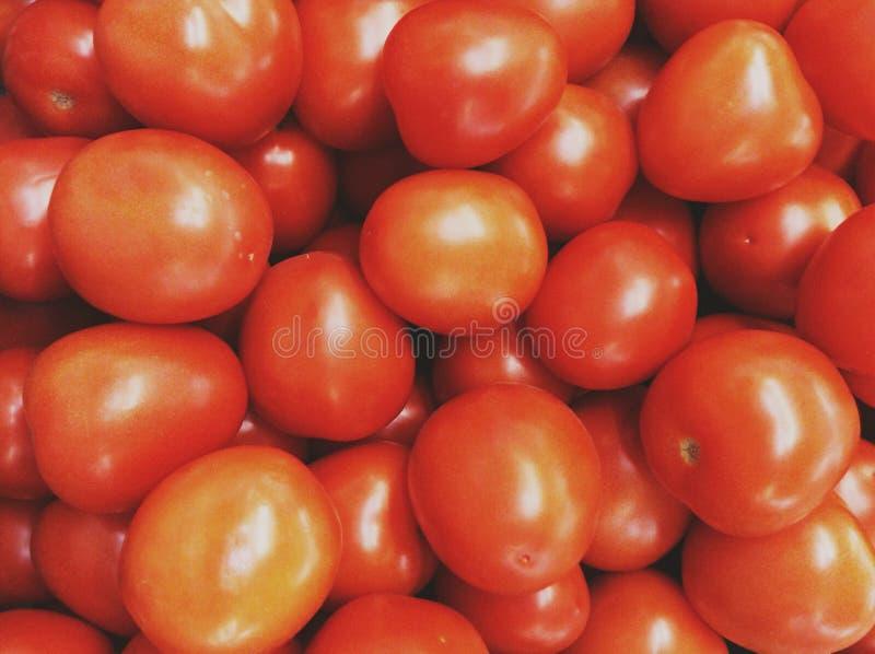 Pomodori rossi fotografia stock libera da diritti