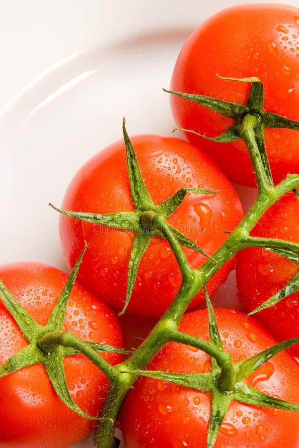 Pomodori rossi freschi isolati su bianco   immagini stock libere da diritti