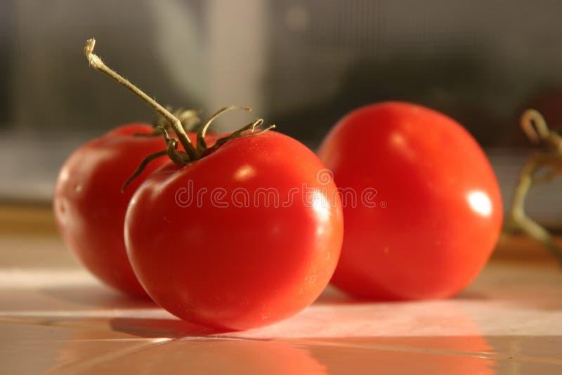 Pomodori rossi maturi selezionati freschi della vite   immagine stock libera da diritti