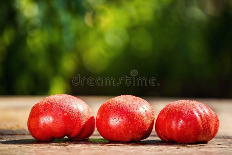 Pomodori rossi sulla tavola su un fondo verde fotografie stock